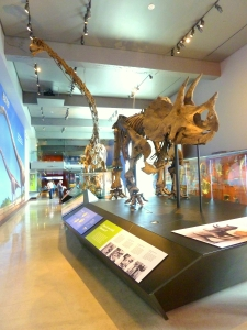Exposition Park - Museum of Natural History1